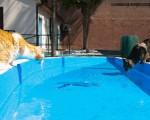Una nuova casa per i gatti