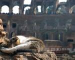 Strutture migliori per gli animali di Roma