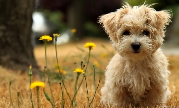 Adottare un'area cani è possibile