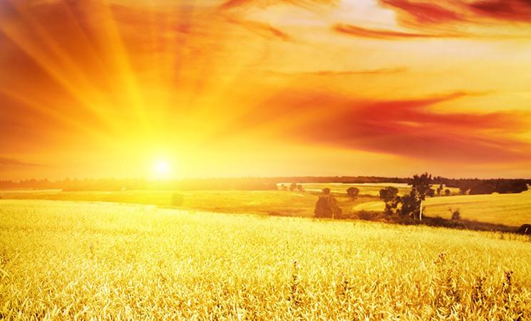 Roma Capitale per il rilancio del settore agroalimentare
