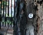 Parte il monitoraggio degli alberi nelle scuole