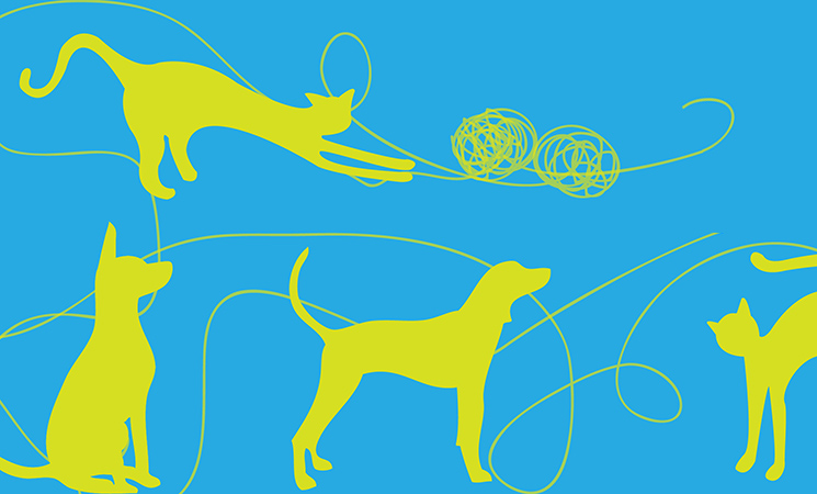 Canili: più tutele e trasparenza per gli animali a Roma